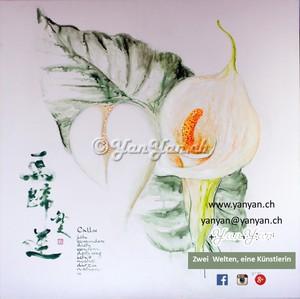 crop-calla-pflanzen